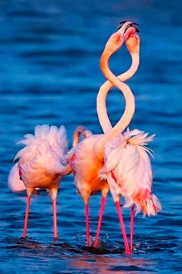 фламинго картинки приколы это