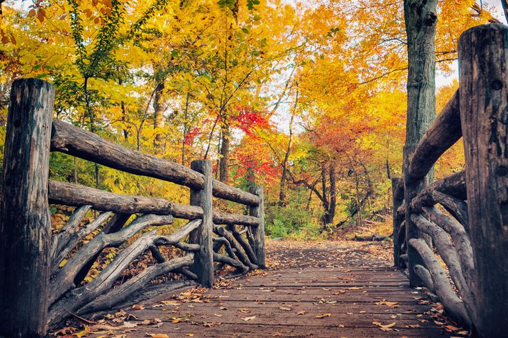 Photograph Rustic Bridge in Autumn - Central Park by Vivienne Gucwa on 500px