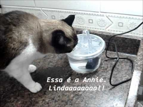 Diy water fountain for cats dogs diy crafty ideas for Diy cat water fountain