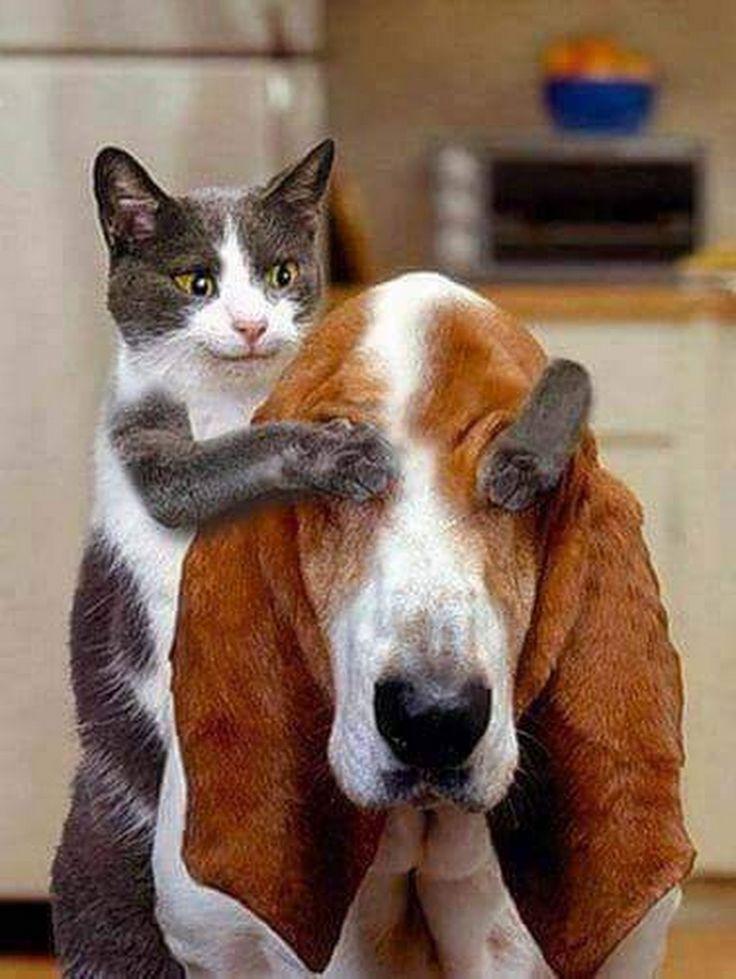 Картинки любовь, фото собак и кошек смешные