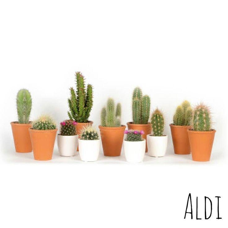 Best-budget-buy; vanaf vandaag zijn deze leuke cactussen (met keramieken pot) te…