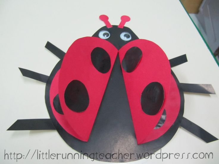 Ladybug Body Parts for Kids - WOW.com - Image Results