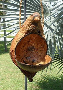 BIRD Feeder HOUSE Hand Carved COCONUT All Natural 9 ...