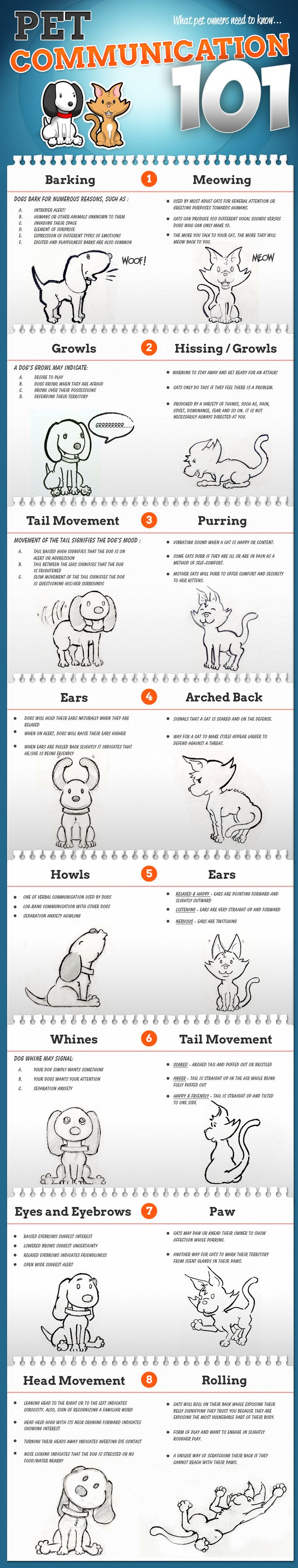 How Dogs and Cats Communicate Infographic | EntirelyPets