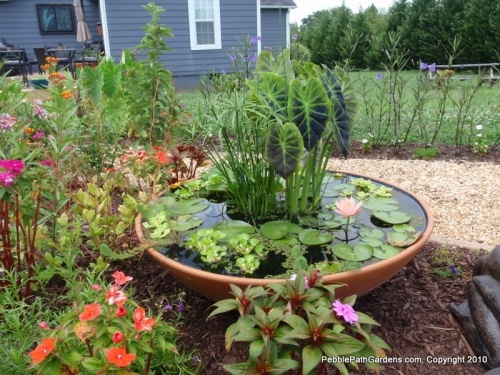 water bowl garden with lilly and taro