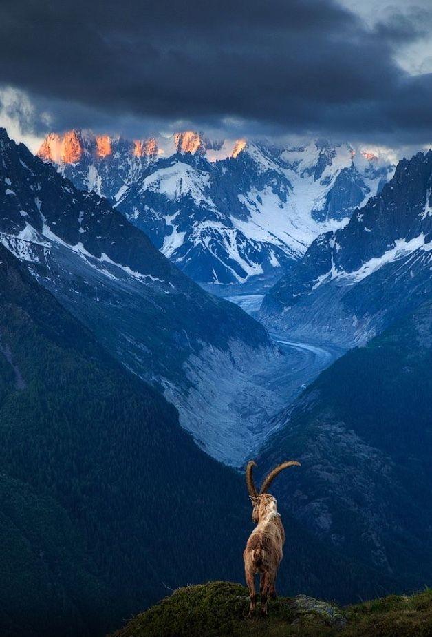 ©Sven Broeckx Ibex,Chamonix valley