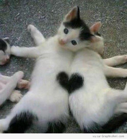 Ces petits chatons font un cœur.