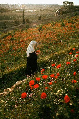 A nun from the Benedictine Convent on the Mount of Olives picks red poppies.   Date Photographed: May 01, 1968