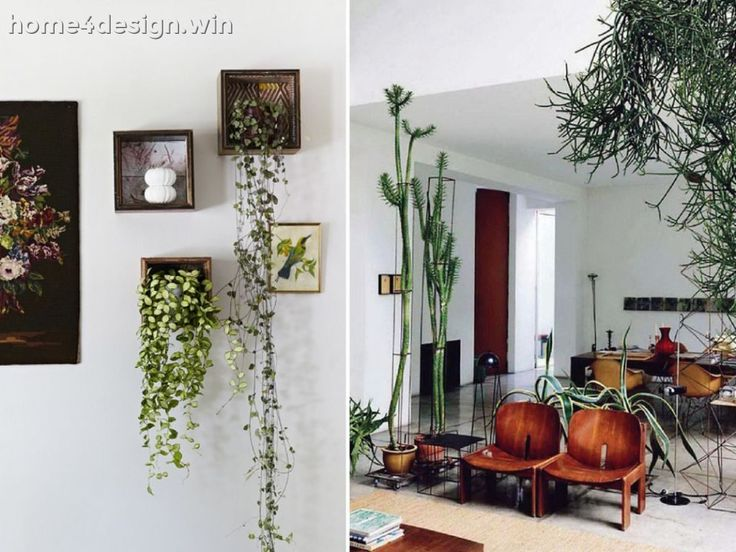 Living Room: Decorating Your 2017 Living Room With Plants Transitional Design In Home Plants Fabulous Plants For The 2017 Living Room Big 2017 Living Room Plants 5 Decoration Idea 2017 Living Room Plants: living room plants