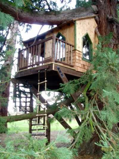 Cedar tree house