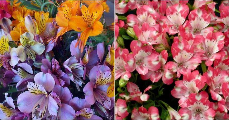 ¡Arco iris permanente en las flores de esta planta!