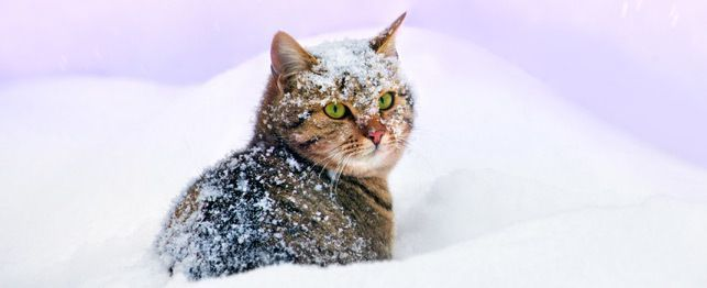 How Cold is Too Cold for Cats? Tips to Keep Your Feline Friend Safe