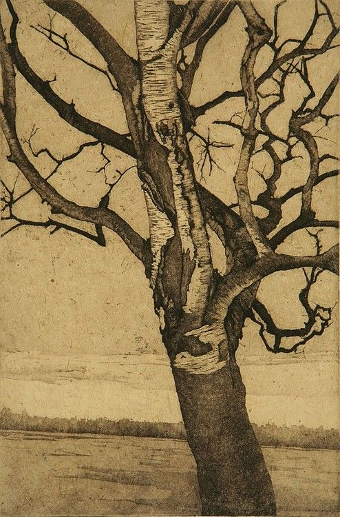 Anna McKee, Birch at Lake-1, etching, 12in by 8in, 2008