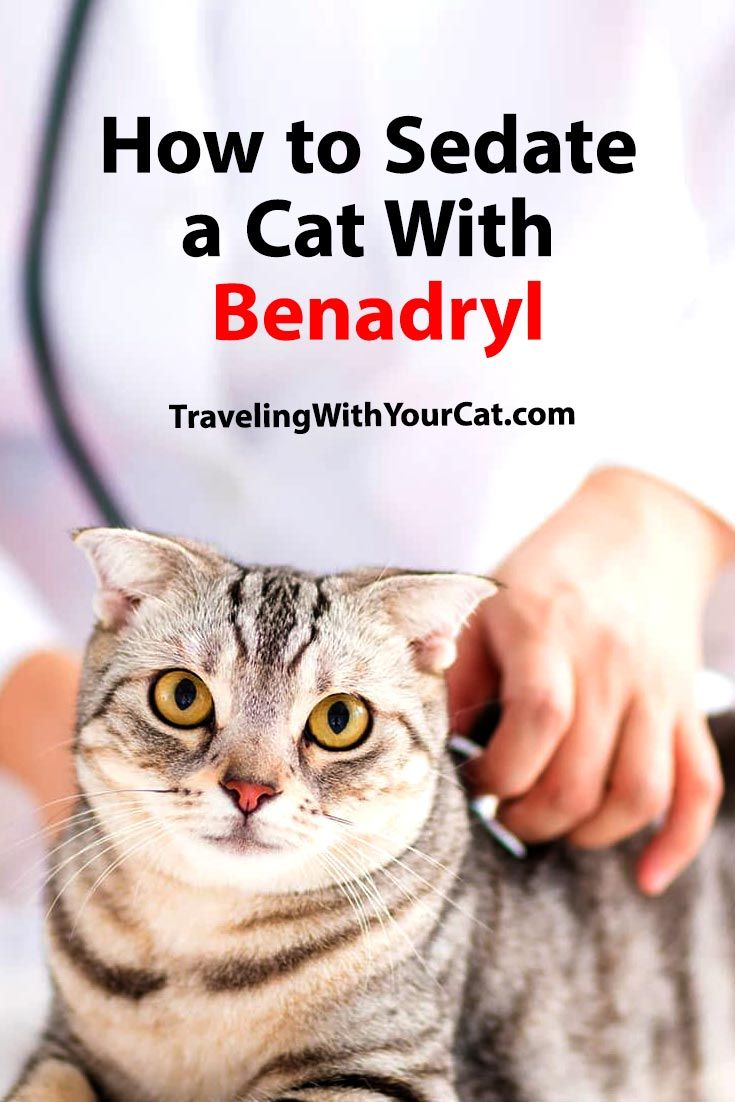 How To Sedate A Cat With Benadryl Traveling With Your Cat In 2020 Benadryl Cats Cat Health