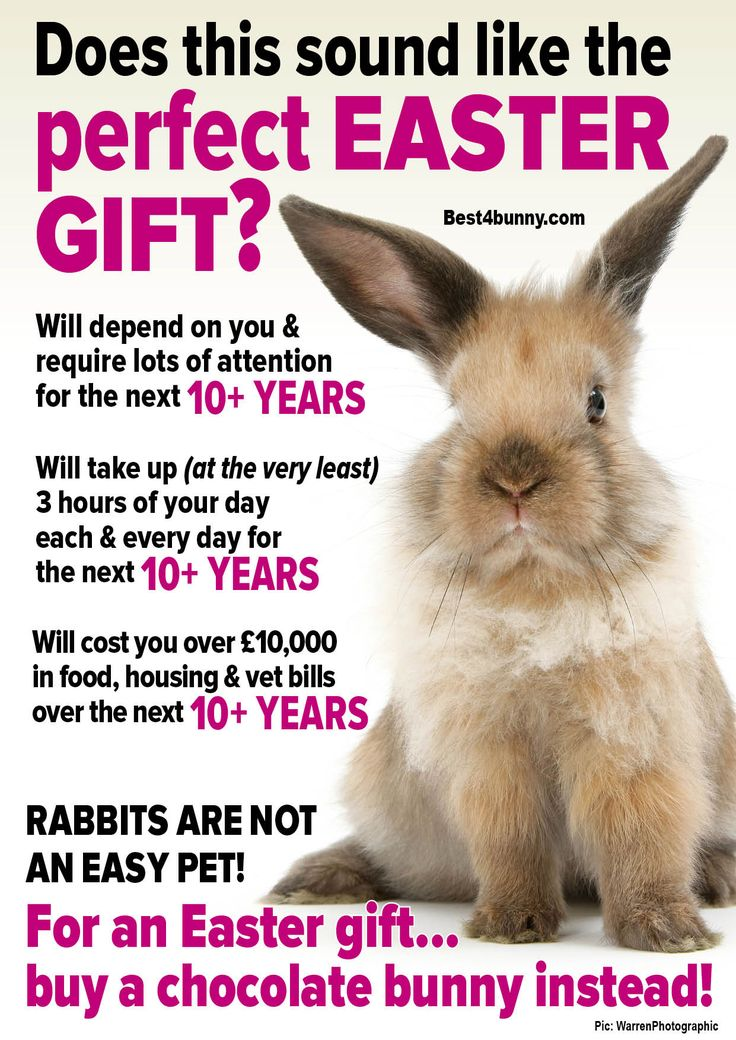 85 best bunnies are for life not for easter images on pinterest does this sound like the perfect easter gift of course not best4bunny negle Choice Image