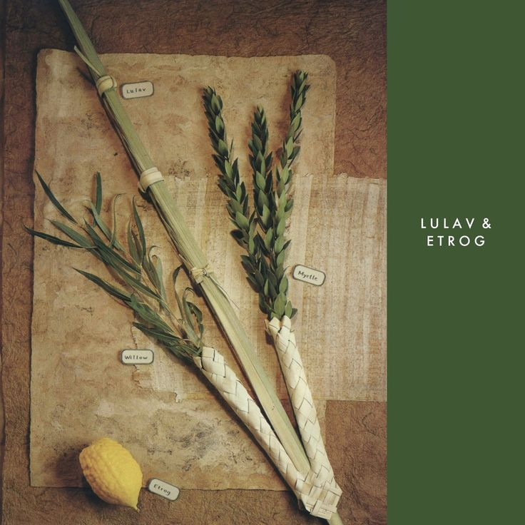 Design Megillah: Lulav and Etrog