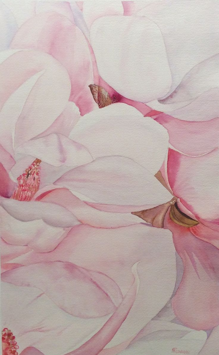 A mess of Magnolia  watercolour by Heather Plowman
