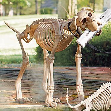sasha the skeleton dog