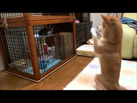 Community: Dog Sends Peace Message To A Kitten