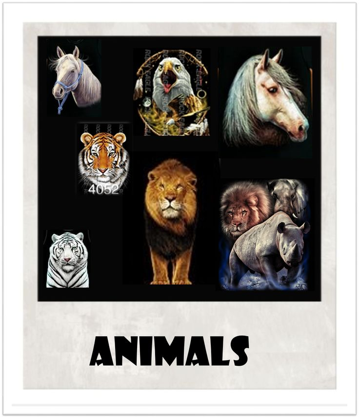 T-SHIRTS & HOODIES ANIMALS