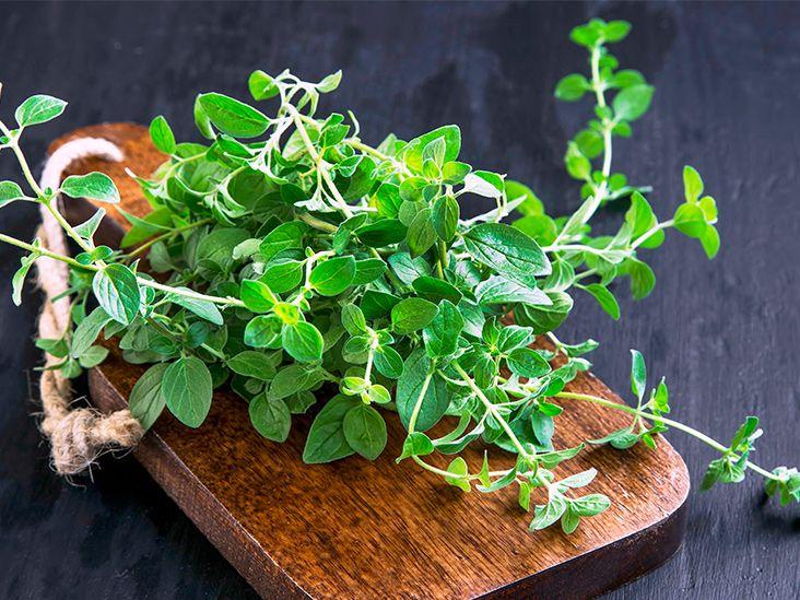 15 antiviral herbs to keep you healthy herbs anti viral