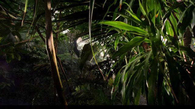 Växternas hemliga liv: Smarta överlevare