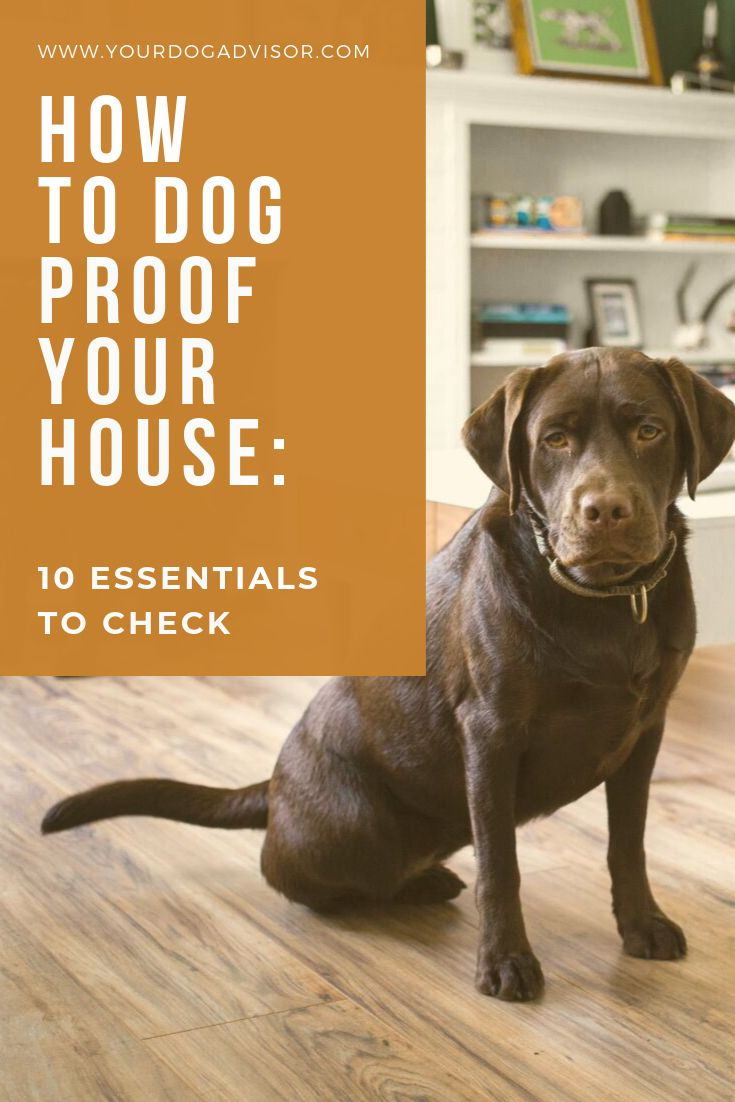 How to dog proof your house 10 essentials to check