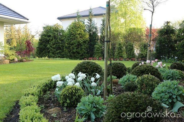 To tu... - strona 327 - Forum ogrodnicze - Ogrodowisko