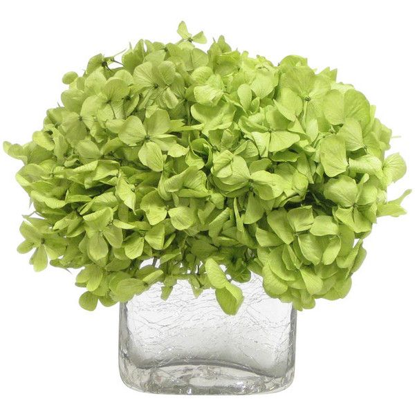 Cracked Glass Cube, Basil Hydrangea - Transitional - Artificial Flower... ❤ liked on Polyvore featuring home, home decor, floral decor, fake hydrangea arrangement, silk hydrangea bouquet, hydrangea silk flower arrangement, glass home decor and hydrangea fake flowers