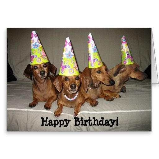 Dachshund Birthday Meme Google Search Birthday Cards Pinterest Happy Puppy Birthday