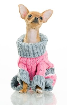 20 Best Images About Cute Chihuahua Clothes On Pinterest