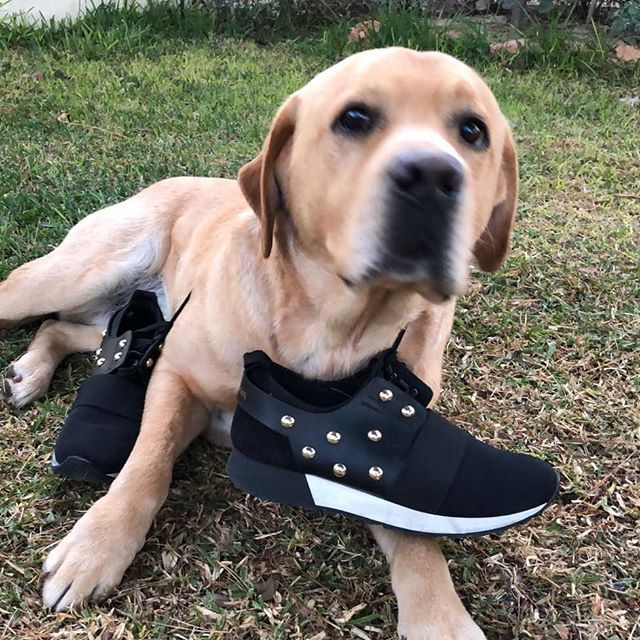 Today is our day. Let's have a long walk together. #loveshopping #loveanimals #dogsofinstagram #ootd #sales #sixtysevenshoes #labrador