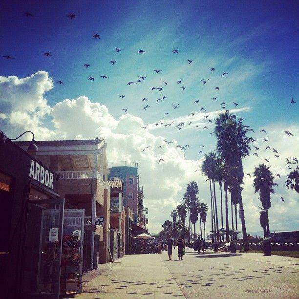 Venice Beach, California / photo by Laura Lawson