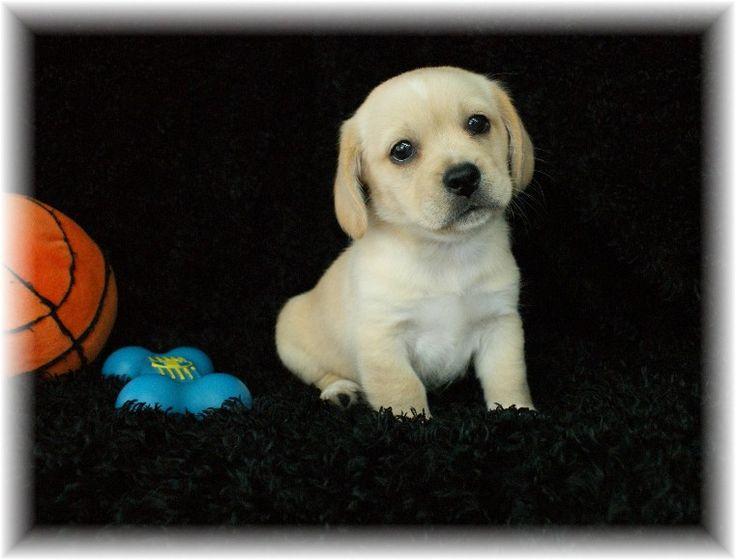 Really, really cute peagle