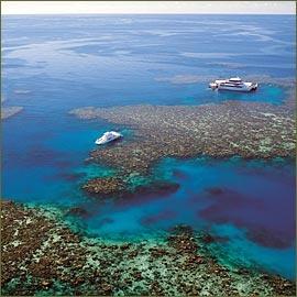 Stora Barriärrevet. Hoppas på att kunna ta en tur hit i sommar. Om logistiken bara funkar!