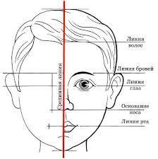 Resultado de imagen para пропорции человека для лепки