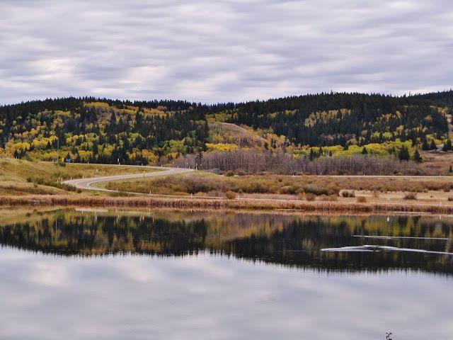 Cypress Hills Interprovincial Park - Alberta side, near the Town of Elkwater.