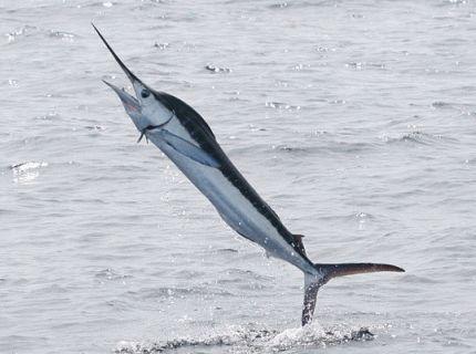 海釣りの対象魚一覧-海釣り渓流釣り情報入門館