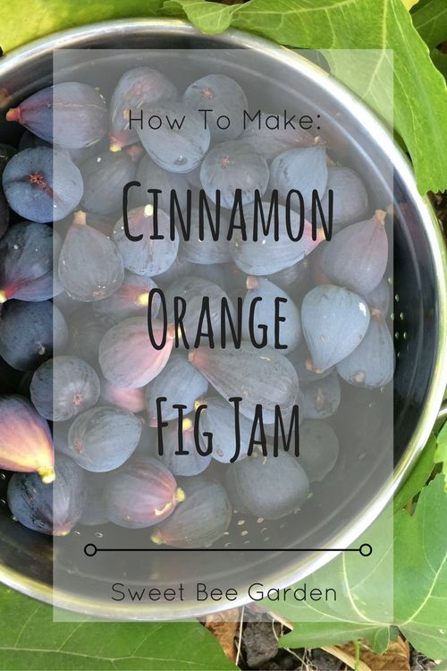 Its fig season, and time to make Cinnamon, Orange and Fig Jam. Read more for my recipe!
