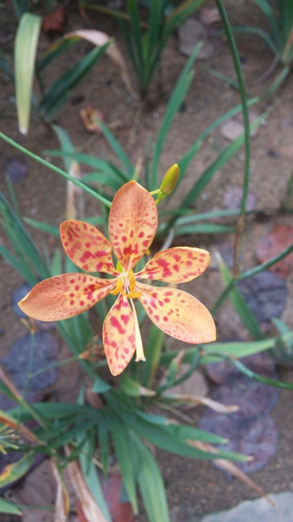 Beautiful Malaysian flower.