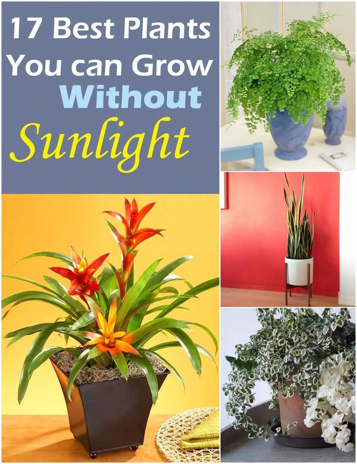 Plants That Grow Without Sunlight Gardens Pinterest