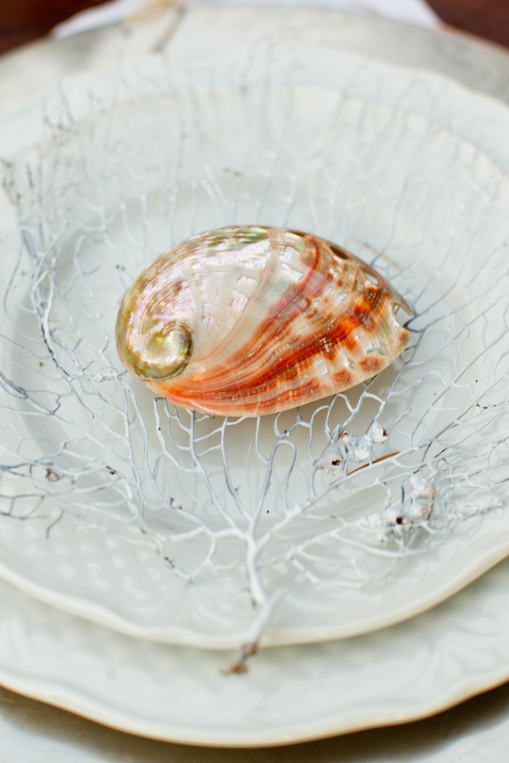seashell #sea wedding theme#