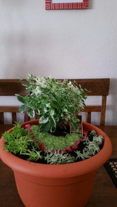 17 best images about mis jardines en miniatura on for Jardines en miniatura