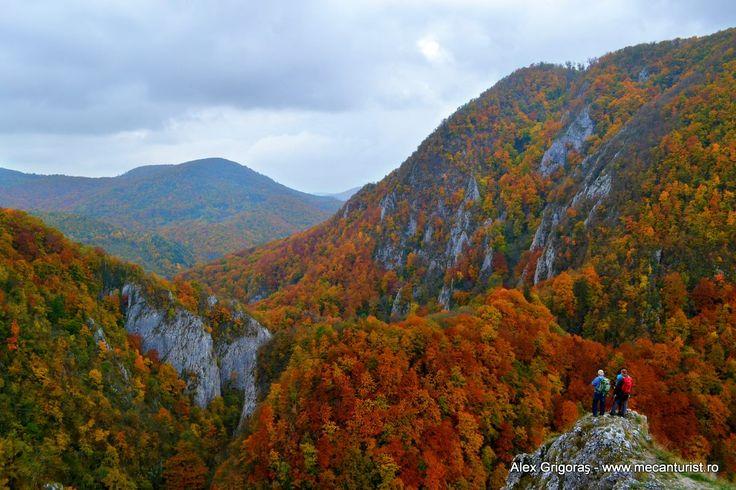 Cheile Varghisului Deasupra Cheilor, la punctul de belvedere, la iesirea in gol alpin din traseele cu banda galbena si punct rosu.