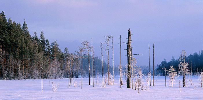 Seitseminen National Park - Nationalparks.fi