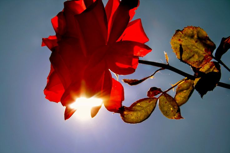 J rose W