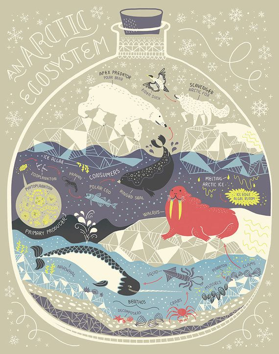 An Arctic Ecosystem: Terrarium Art Print by Rachelignotofsky