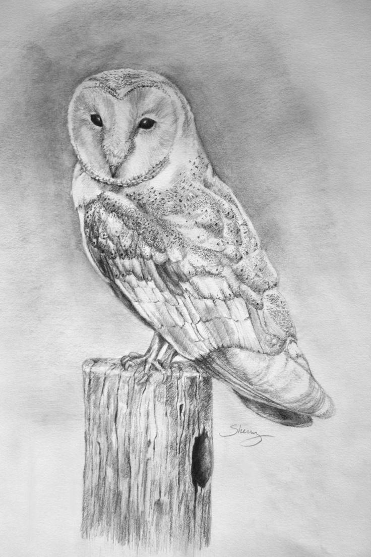 original realistic pencil drawing of a Barn Owl