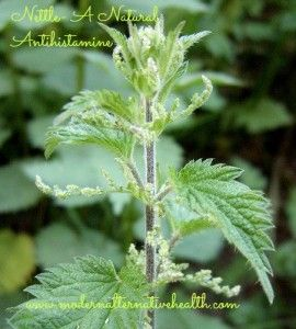 Nettle is a natural anti-histamine. Buy it freeze dried in capsule for ease of taking it, or in tincture form.