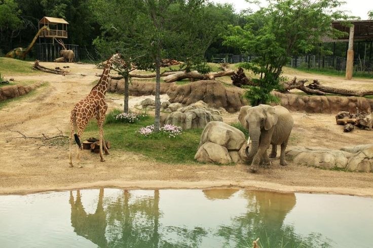 Dallas Zoo, Dallas: See 1,376 reviews, articles, and 854 photos of Dallas Zoo, ranked No.15 on TripAdvisor among 236 attractions in Dallas.